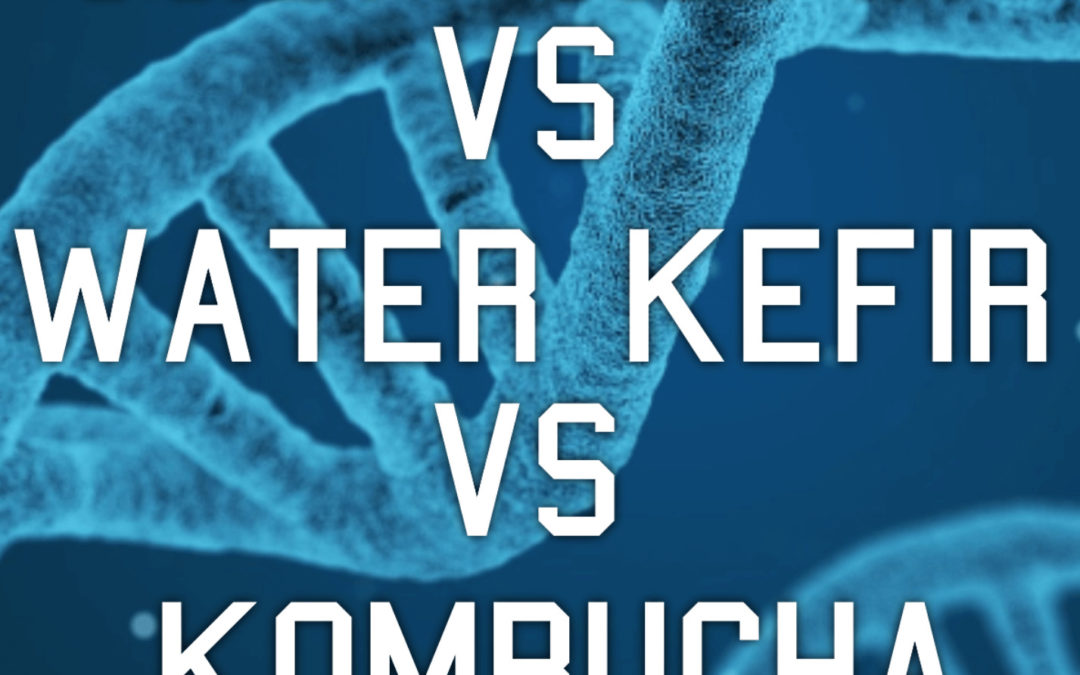 What is the difference between Water Kefir, Milk Kefir and Kombucha
